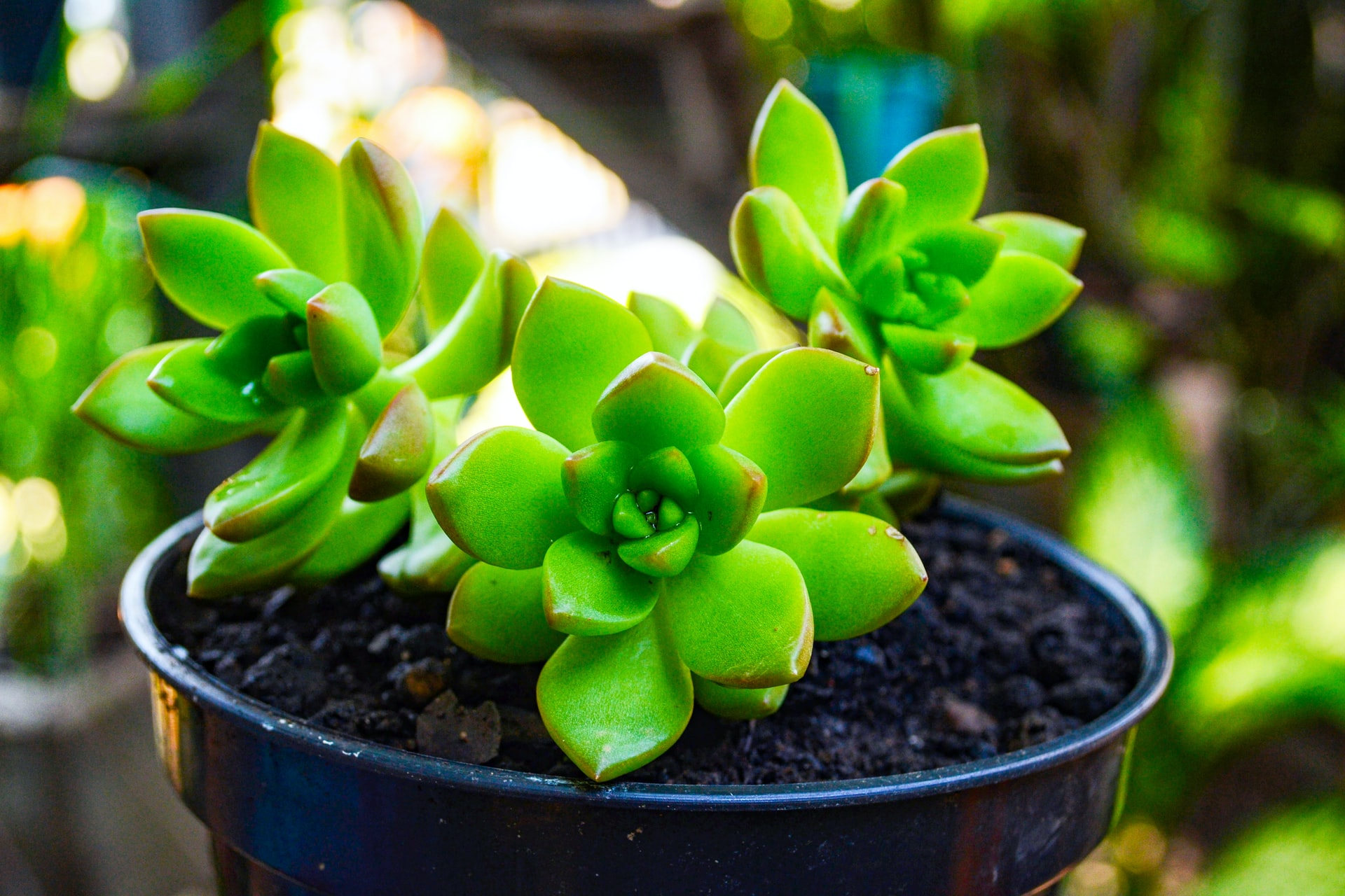 thumbnail of Add These Apartment-Friendly Houseplants to Your Must-Grow List