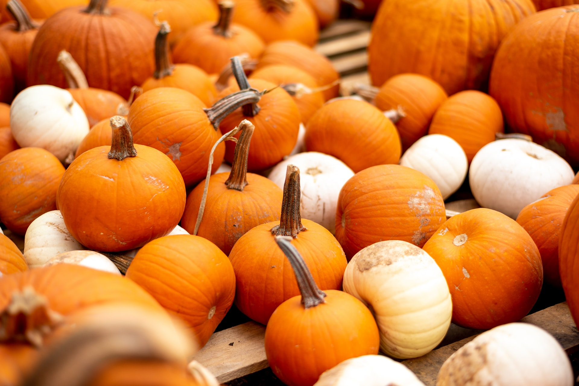 thumbnail of Clever No-Carve Ways to Decorate a Pumpkin